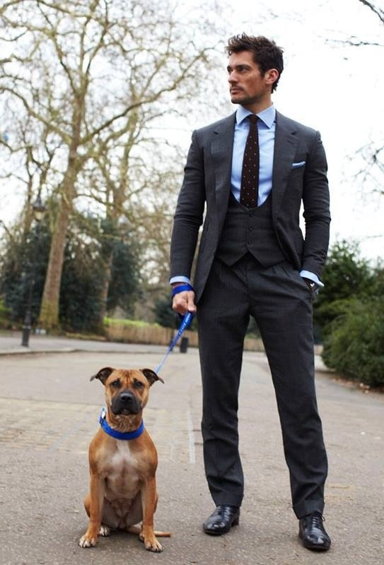 Image Result For Dogs London